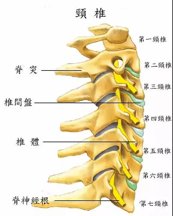颈椎问题怎么吃三七