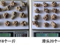 云南文山三七价格表(2021年)