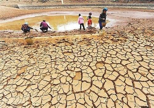 2019年云南干旱会对三七价格走势有什么影响?会上涨吗?
