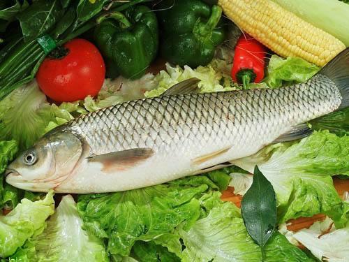 三七粉与鱼能同吃吗?吃三七粉为什么不能吃鱼?