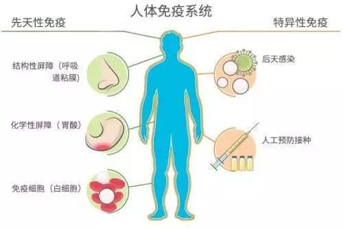 灵芝对免疫系统究竟有什么作用?