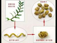 铁皮枫斗和铁皮石斛有什么关系?