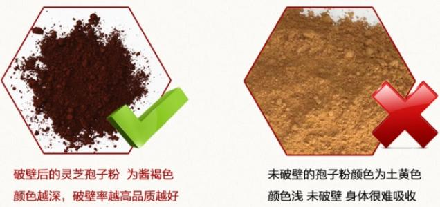 灵芝和灵芝孢子粉的区别