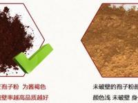 灵芝和灵芝孢子粉的区