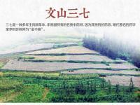 """三七的产地在哪?主产区云南文山是""""三七之乡"""""""