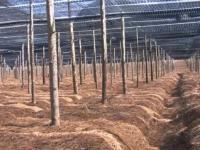 三七种植一亩的成本多少钱
