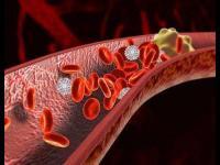 三七粉对血液和造血系